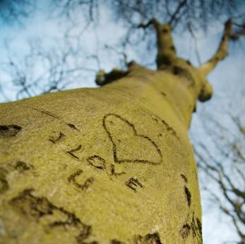 لِي مزَـآجْ صَعْب تَرْوِيقَهْ ,, مـآيجِيبْ رآسَـهْ إلَـآ ح' ـنَآنـكْ.,/~ - صفحة 4 Tree_love